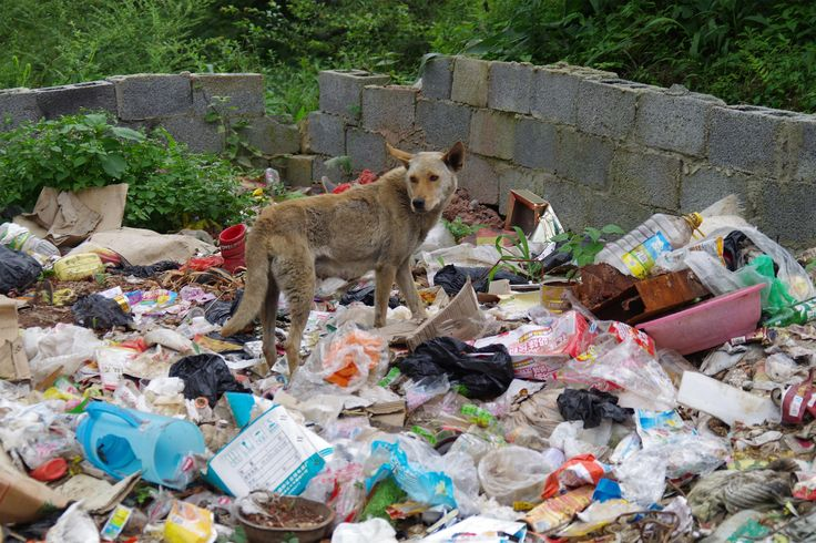 Stray dog among rubbish in rural China  https://www.facebook.com/ACTAsiaForAnimals https://twitter.com/Tweet_ACTAsia https://www.youtube.com/user/ACTAsia1 http://www.oninstagram.com/profile/actasia https://www.linkedin.com/company/actasia-for-animals http://actasia.tumblr.com/ https://issuu.com/actasia