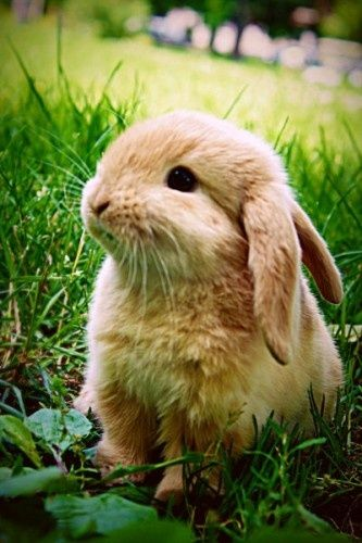 Lindsey has made me realize I want a Bunny.