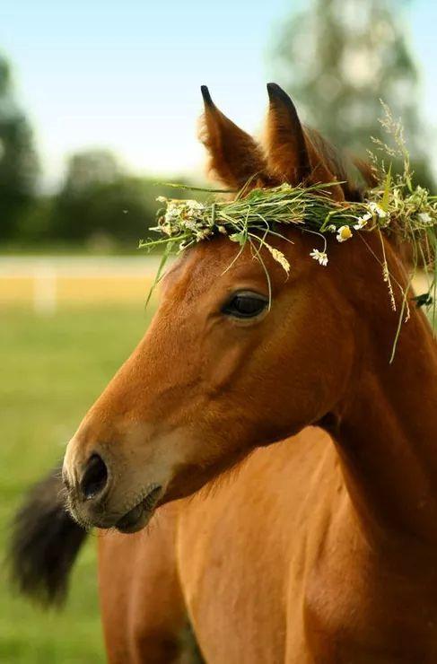 Like a horse model