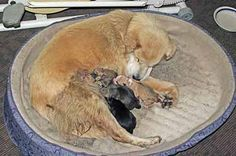 Stages Of Canine Labor - When Your Dog Gives Birth