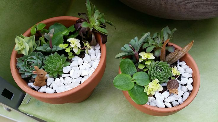 Miniature world succulent terracotta pot