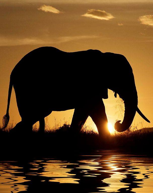 Sundown silhouette (cropped for Pinterest) http://www.beautiful-animals.com/25-most-beautiful-animals-photography-on-stumbleupon/