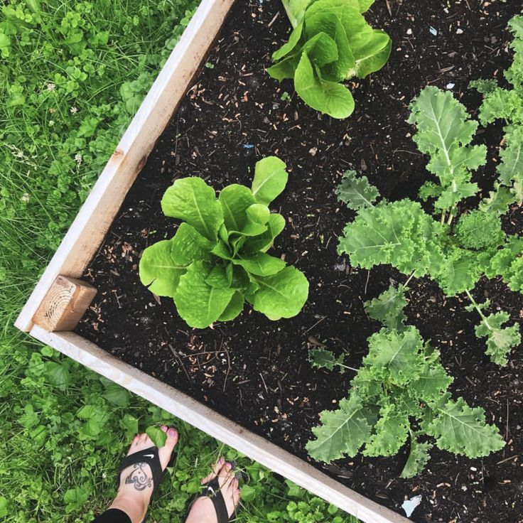 best tips from instagram gardeners for beginners #Gardenforbeginners