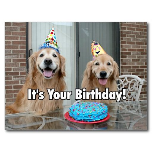 Golden Retriever Happy Birthday Cake Postcard by #AugieDoggyStore.