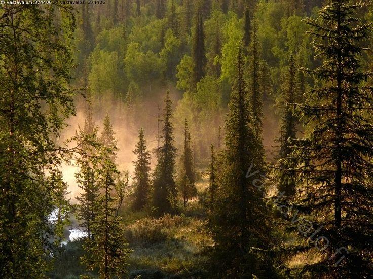 Koilliskaira Urho Kekkosen kansallispuisto kesä Finland