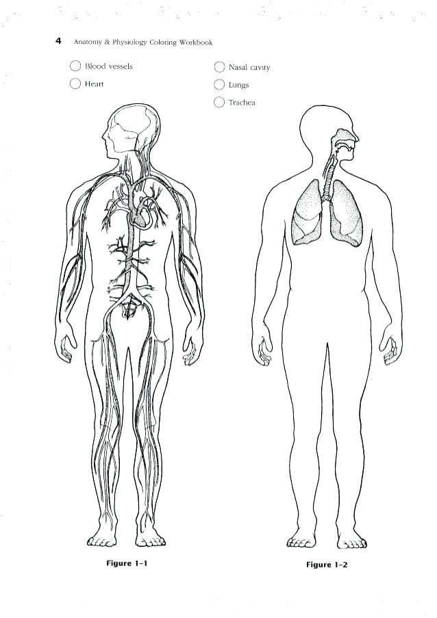 Anatomy And Physiology Coloring Pages Free Collection