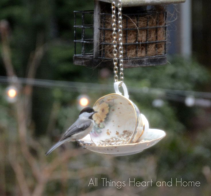 Teacup Bird Feeder - All Things Heart and Home