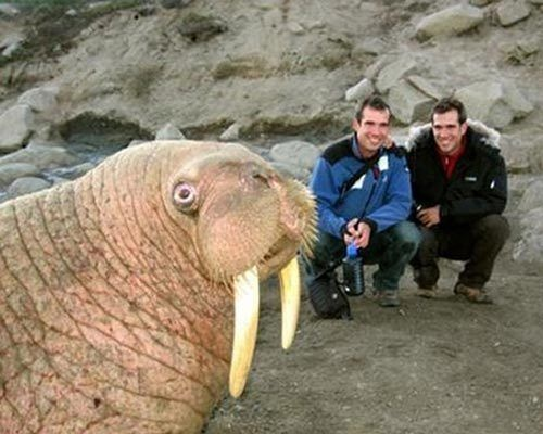 Best Animal Pictures Photo Bombs With Animals Images On - 35 hilarious animal photobombs ever