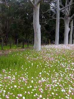 Creating that European wild flower look with Australian natives, the tree trunks are so beautiful.