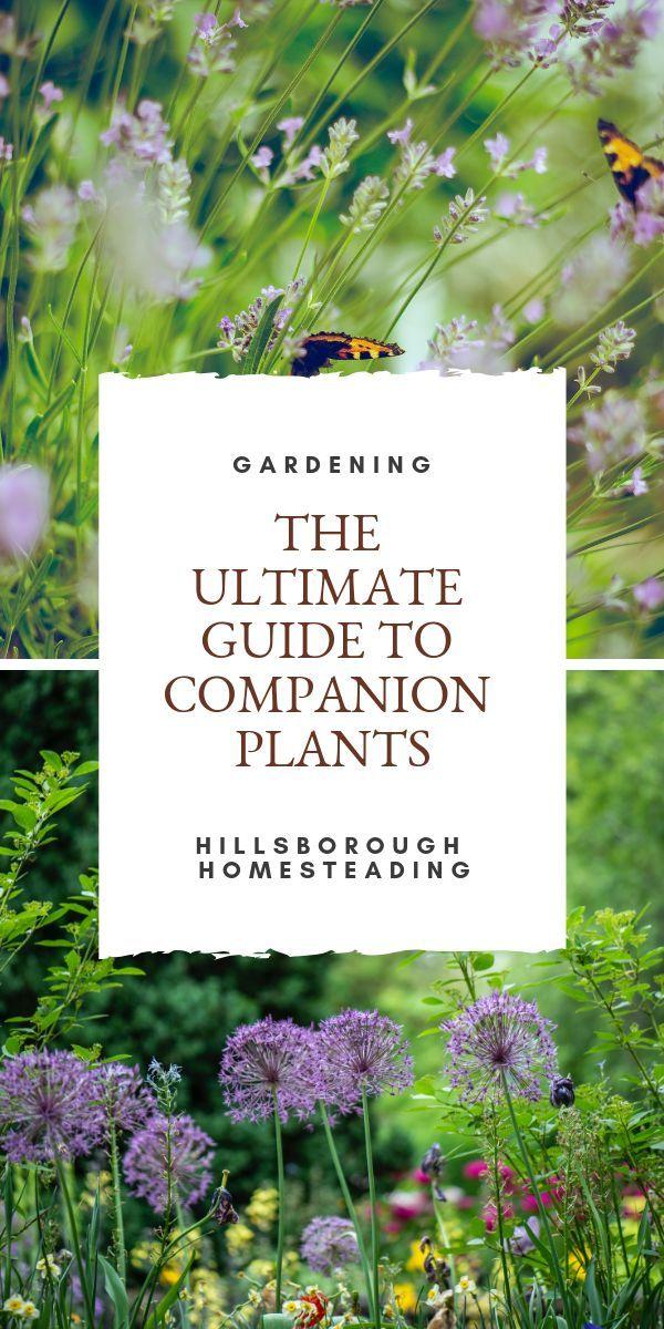 Die Top 60+ Companion Pflanzen (und wie man sie benutzt)