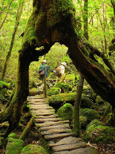 shiratani unsuikyo, yakushima, kagoshima, japan -- #asia #bridge #forested