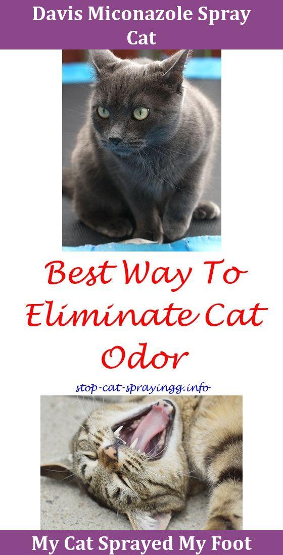 Cat Pee Out Of Clothes Hartz Ultraguard Spray For Cats,cat peeing pet urine felifriend spray cat raid flea killer plus carpet and room spray cats c…
