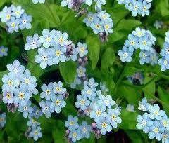 Çiçek türleri, mevsimlik çiçekler, bir yıllık çiçekler, çok yıllık çiçekler,çiçeklerin ömrü, bahçe çiçekleri, bahçe bakımı, budama, gül,bahçe çiçekleri