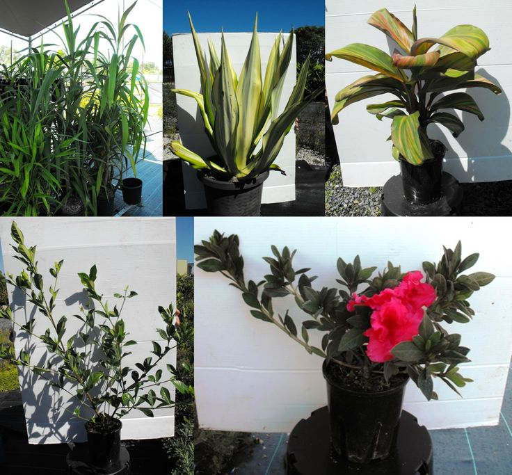 Click here and see our beautiful plants in the Nursery Clearance!  *BID NOW*
