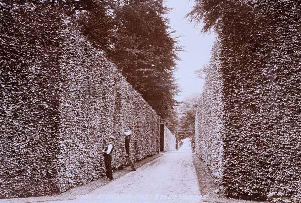 Beech hedge and gardeners: Garden Privacy, Hedge Trimming, Garden Design, Beggar S Roost, Garden Espalier, Roost Ideas
