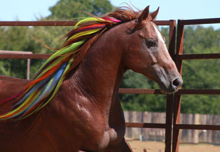 The 15 Best Fab And Funky Images On Pinterest Beautiful Horses