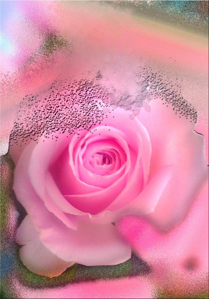 Admire my pink roses in the vase , i was thinking how sad you do not live forever , then i took one behind my ear , making a selfie because iwanted it to blossom for you all, to watch here...