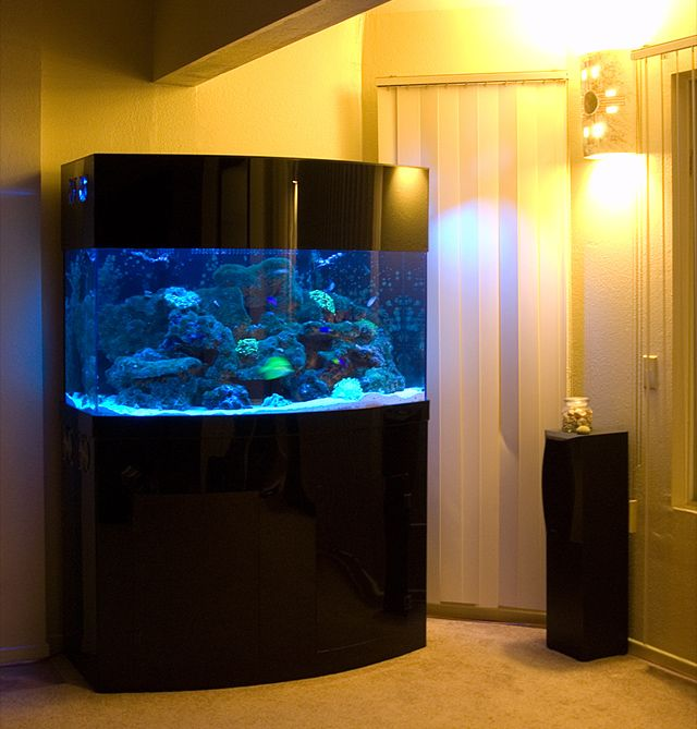 83 best awesome fish tanks images on pinterest fish for Awesome fish tanks