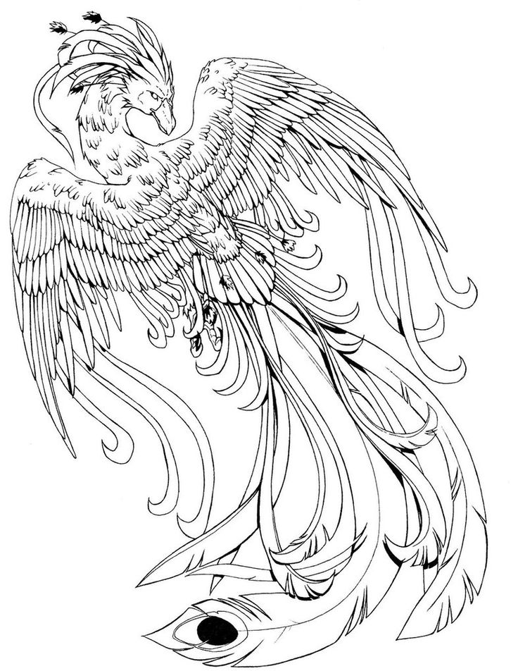 Phoenix B/W   Bird coloring pages, Harry potter coloring ...