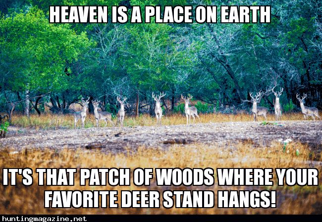 Heaven on Earth – Looking Meme