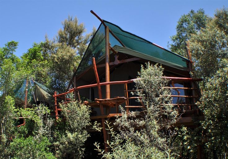 Tree House in South Africa | Glamping Resort Treetops South Afirca Knysna with Sink, Shower