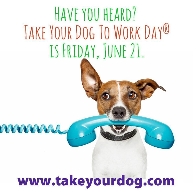 Pin by Petplan Pet Insurance on Take Your Pet to Work Week
