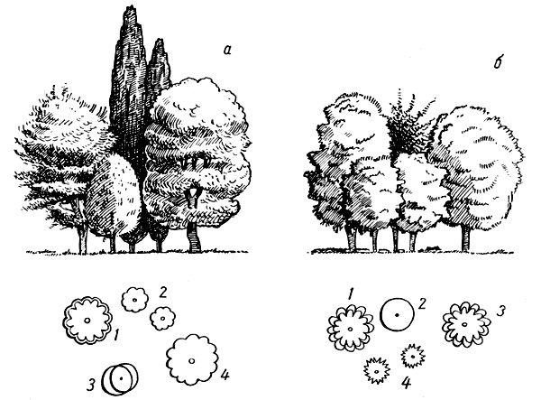 Рис. 16. Простые ландшафтные группы: а. 1 — орех грецкий; 2 — тополь туркестанский; 3 — груша обыкновенная; 4 — дуб черешчатый; б. 1 — орех черный; 2 — клен серебристый; 5 — орех серый; 4 — маклюра оранжевая