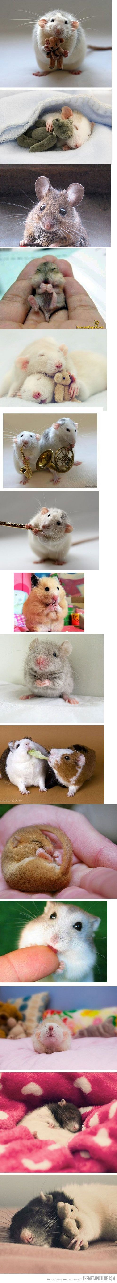 okay, sometimes even rodents can be cute...