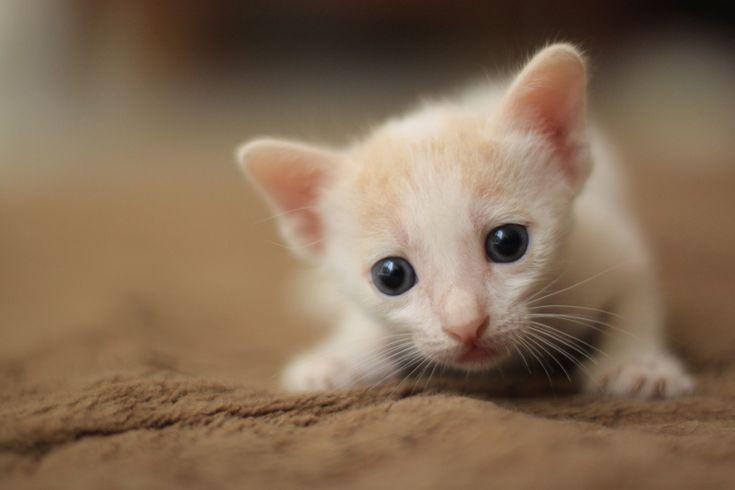Eye Kittens, Kitty Stockings, Blue Eye, Currently, Aoao2 Deviantart Com, Animal