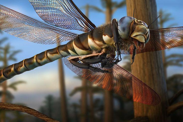 U N Insects 41 best E V O L U T I ...