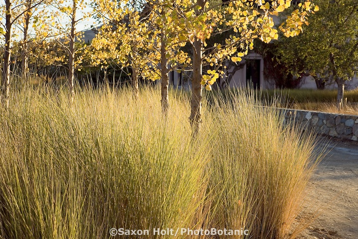 17 best images about missouri native plants on pinterest for Mass planting grasses