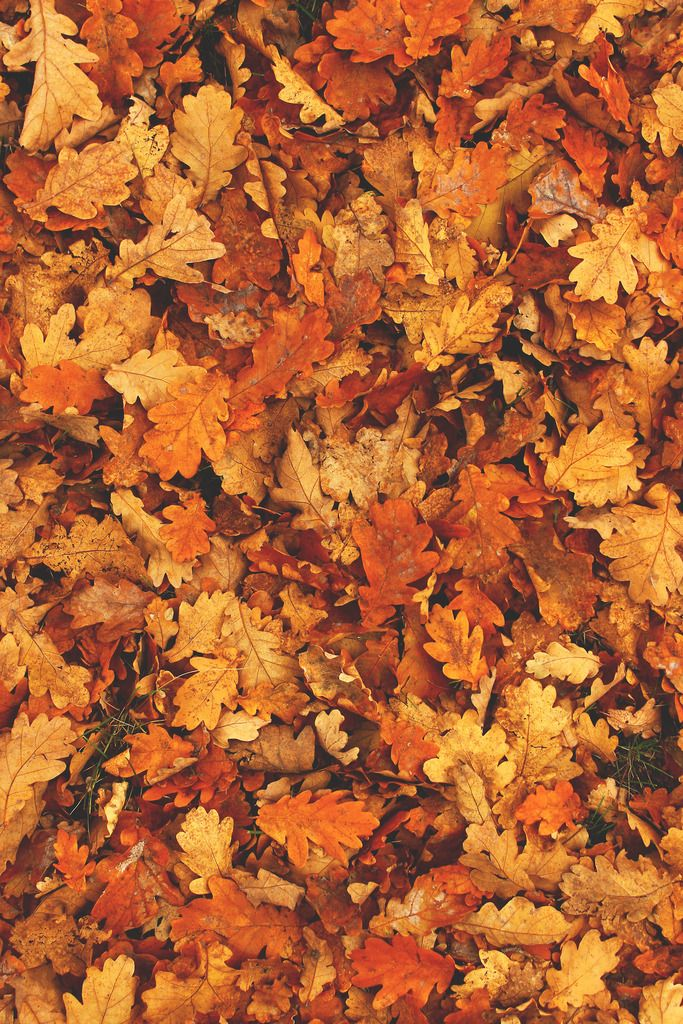 Fall Leaves And Pumpkins Wallpaper Under Construction Via Tumblr On We Heart It Autumn