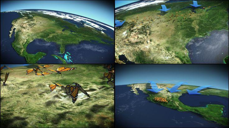 the journey of butterflies in America