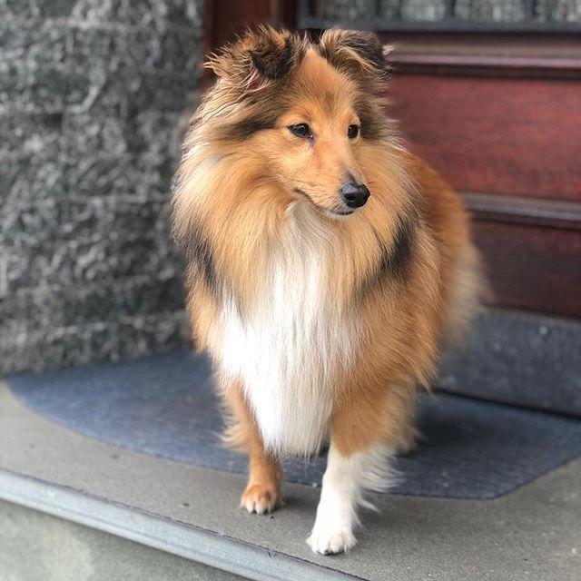 Keine Fotobeschreibung Verfugbar Regram Via Bwebcjsbouf Welpen Susse Hunde Hundekorb