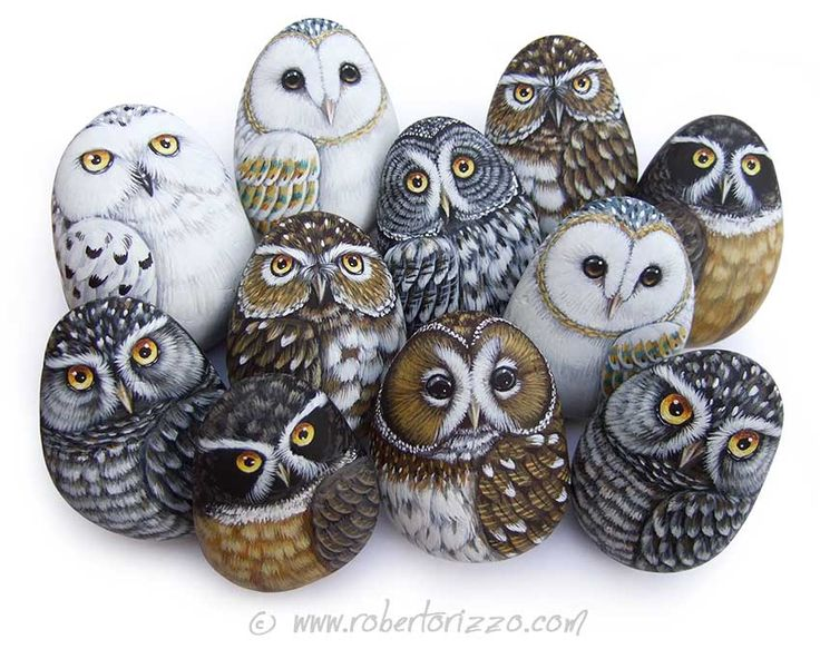 Roberto Rizzo owls painted on rocks