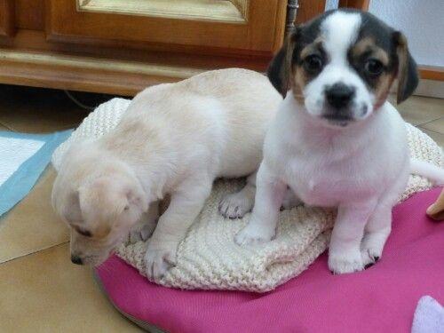 Scarlett & Gypsy