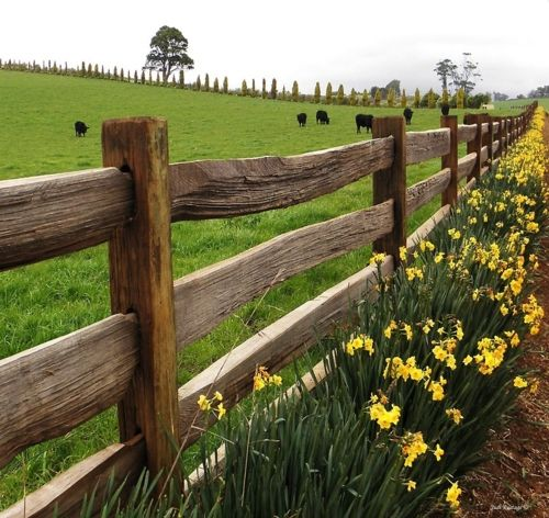 .Love the green pastures...rustic fence and wild flowers..............