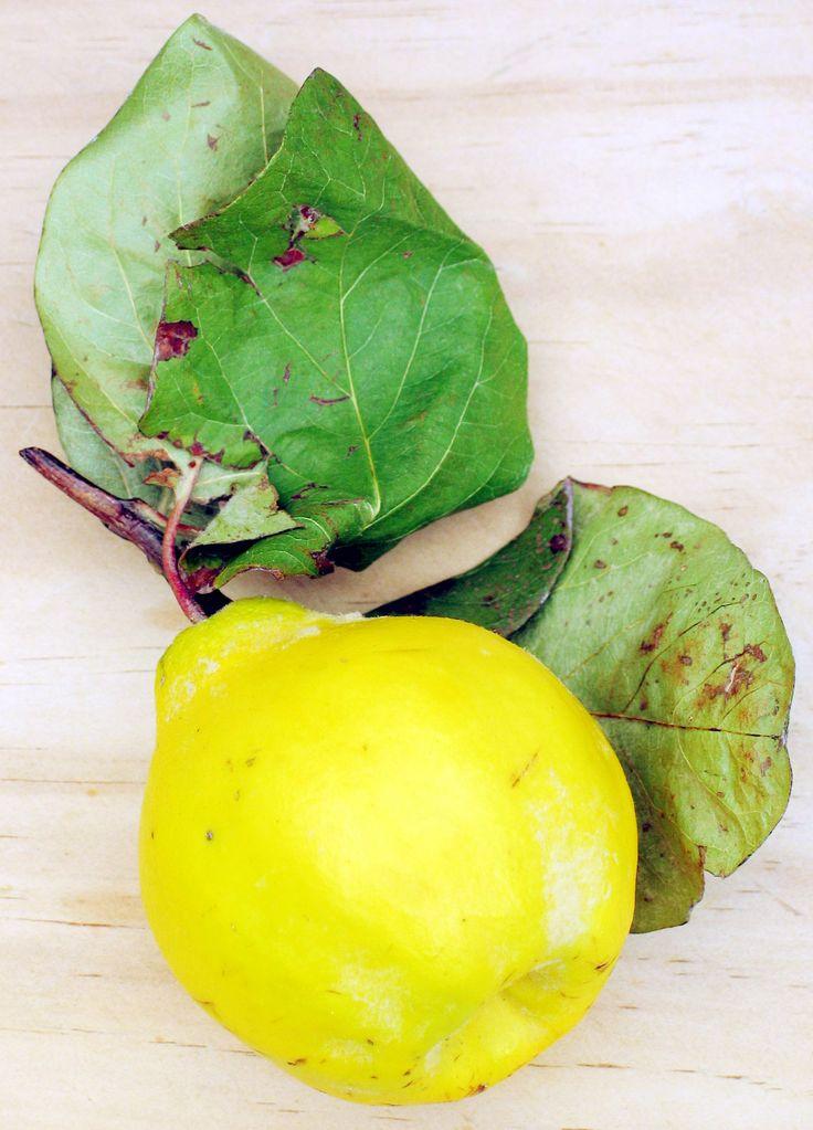 un coing, fruit du cognassier