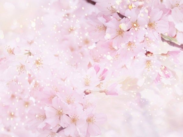 Fleur Rose Pale Fond D Ecran Idee D Image De Fleur