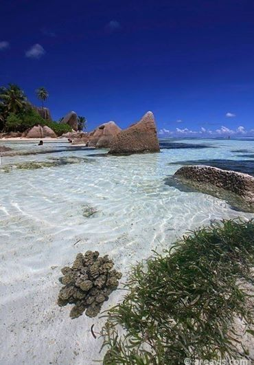 Crystal Clear Water of Seychelles    #seychelles #crystal #water