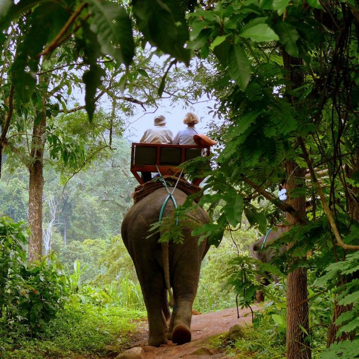 Elephant Ride in Chang Mai. best. thing. ever.