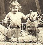 The truth about mean, scary, monster dogs - also known as pit bulls.