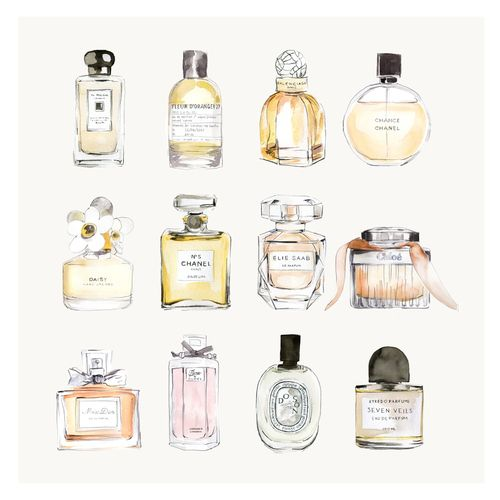 perfumes illustration, zeichnung, Parfüm