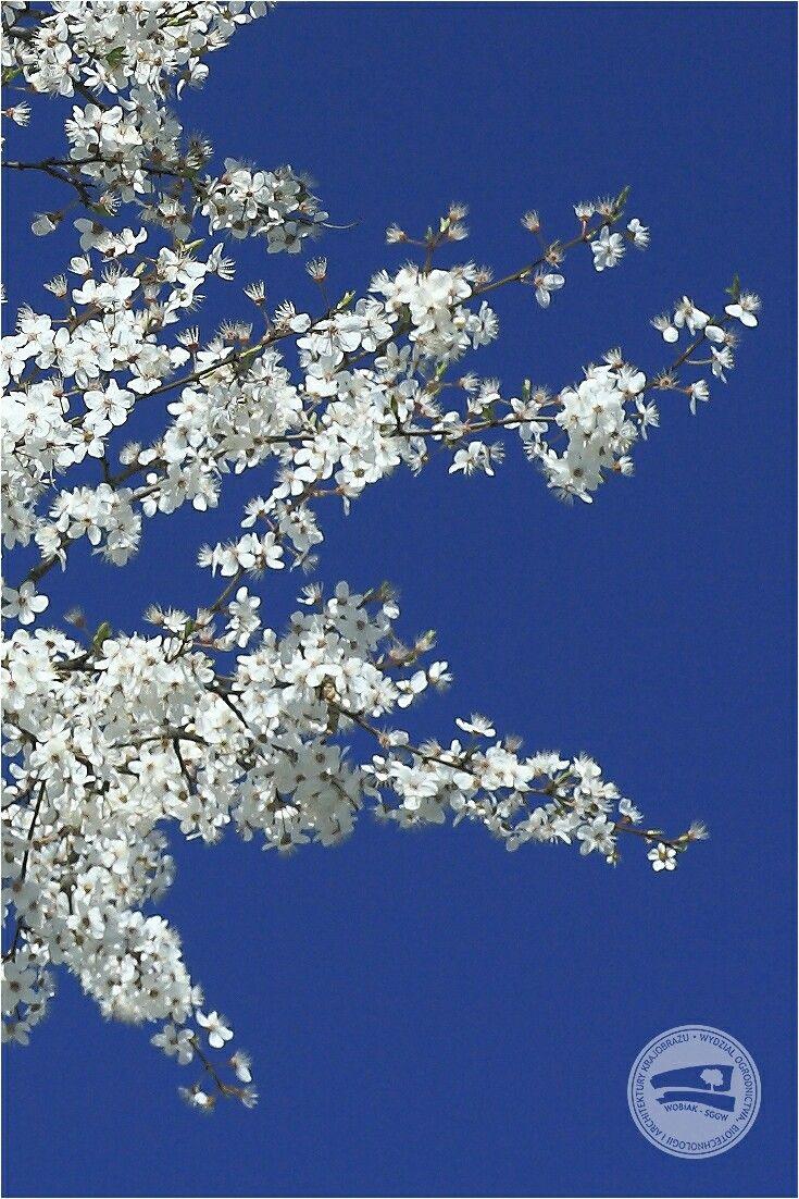 właśnie rozpoczęła się astronomiczna #wiosna! #WOBiAK #SGGW 😁 Astronomical #spring has just begun! #WULS