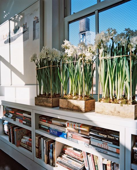 Living Room Photo - Wooden boxes filled with flowering paperwhite narcissus