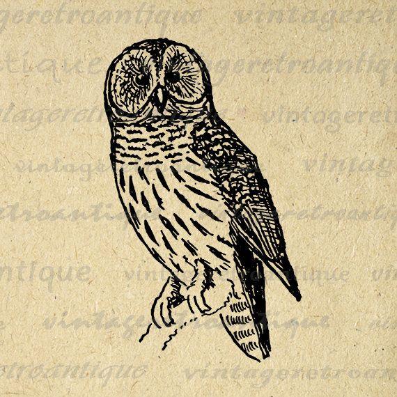 Digital Owl Graphic Image Antique Illustration Printable Bird Download T-Shirts Jpg Png Eps 18x18 HQ 300dpi No.1014 @ vintageretroantique.etsy.com #DigitalArt #Printable #Art #VintageRetroAntique #Digital #Clipart #Download
