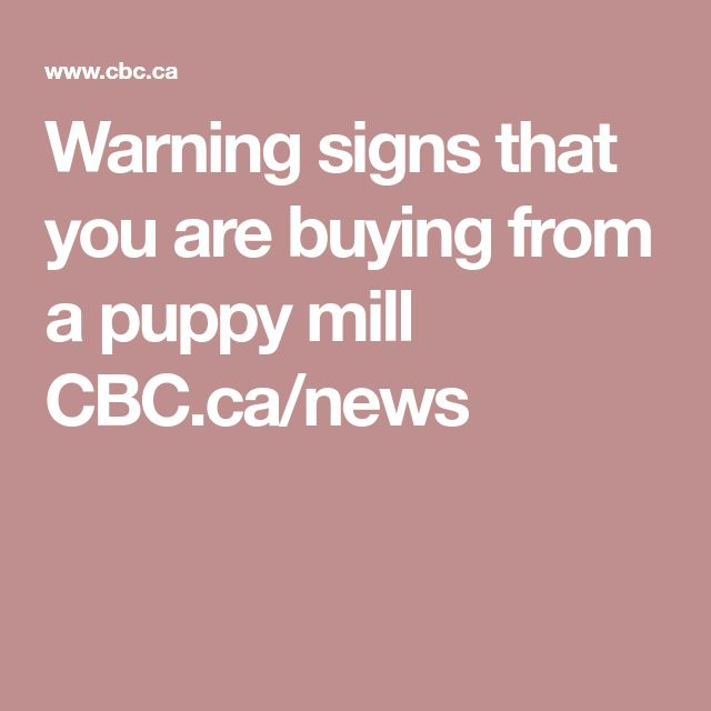 Warning signs that you are buying from a puppy mill CBC.ca/news