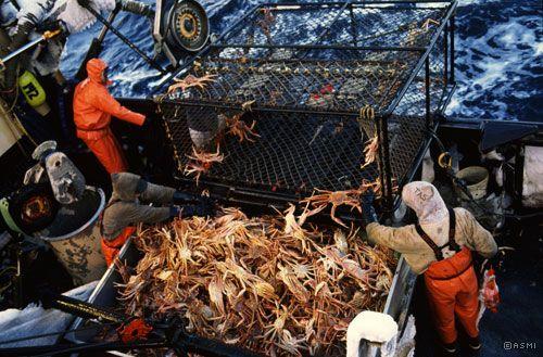 Alaskan Opilio crab fishing