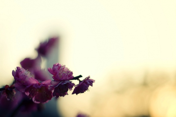 spring is coming: Blog, Photo, Spring