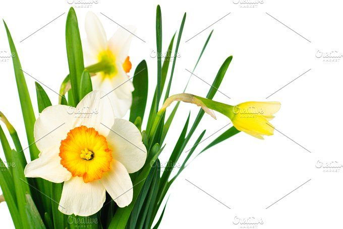 narcissuses bouquet by oksix on @creativemarket